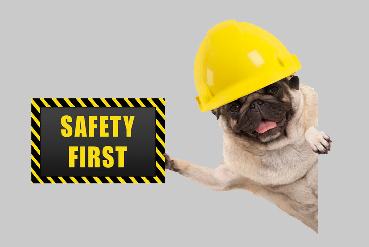 Safety First image featuring a pug canine in a yellow helmet